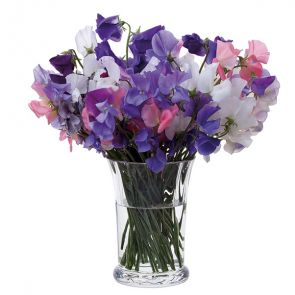 Florabundance Sweet Pea Vase - Slightly Imperfect