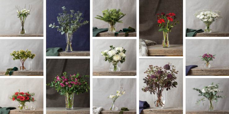 In the spotlight: The Florabundance Collection